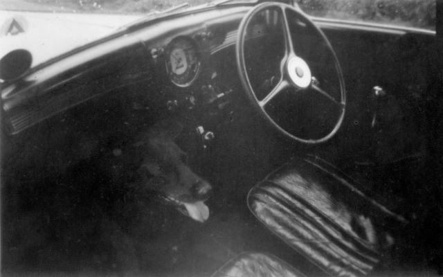 sc-2-dog-interior-anglia188