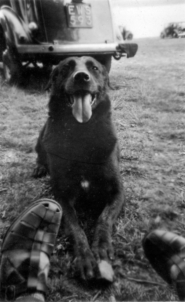 sc-2-doggie-1955