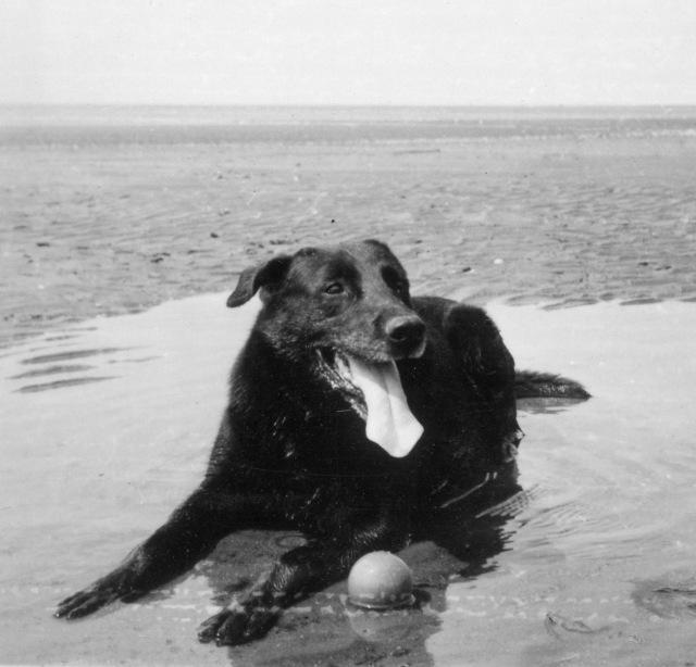 sc-doggie183-copy